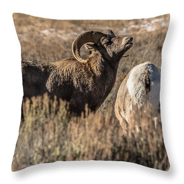 Throw Pillow featuring the photograph Claiming A Mate by Yeates Photography