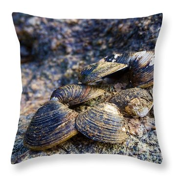 Clam Shells Throw Pillow by Melissa Messick