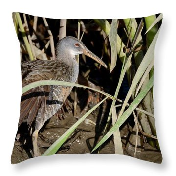 Clapper Rail  Throw Pillow by Kathy Gibbons