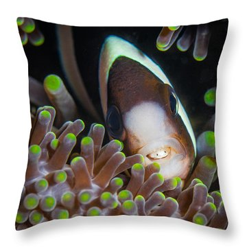 Clarks Anemone Fish Throw Pillow