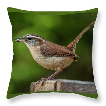 Classic Carolina Wren Throw Pillow