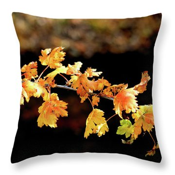 Classic Colors Throw Pillow