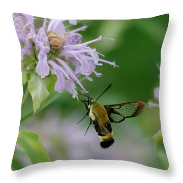 Clearwing Moth Throw Pillow