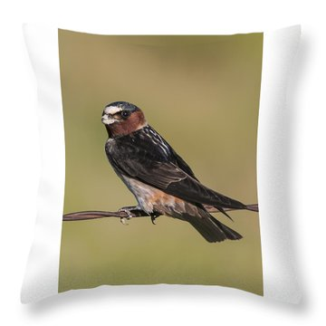 Throw Pillow featuring the photograph Cliff Swallow by Gary Lengyel