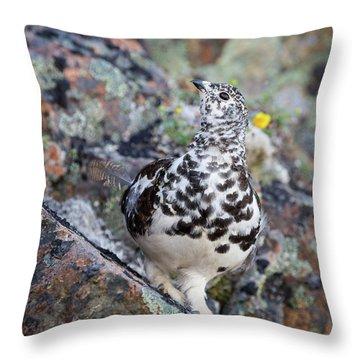 Cliffside Showoff Throw Pillow