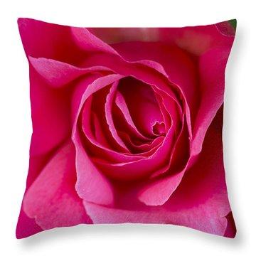 Climbing Rose Galway Bay Throw Pillow
