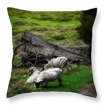 Clint's Sheep  Throw Pillow