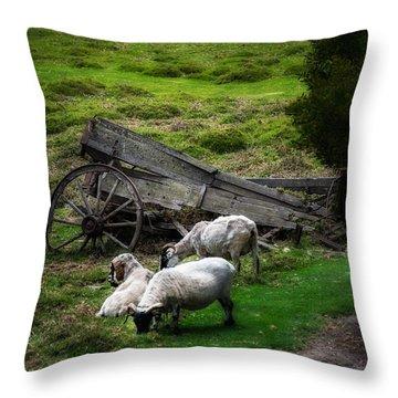 Clint's Sheep  Throw Pillow