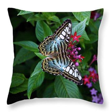 Clipper Butterfly On Star Flower Throw Pillow