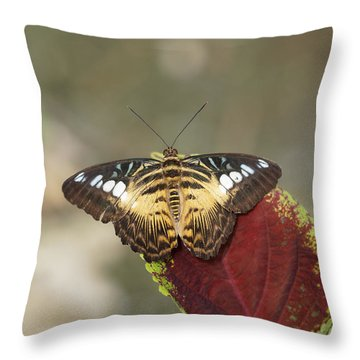 Throw Pillow featuring the photograph Clipper Butterfly by Paul Gulliver