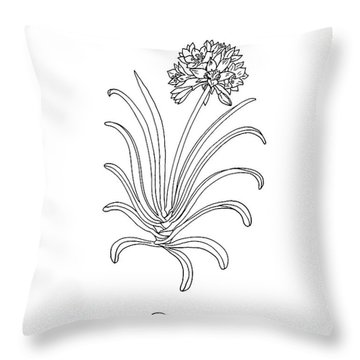 Clivia Flower Botanical Drawing Throw Pillow
