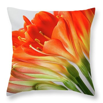 Clivia Miniata 2 Throw Pillow