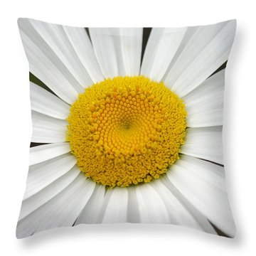 Close And Personal With Miss Daisy Throw Pillow