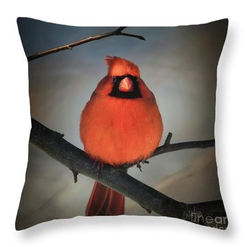 Throw Pillow featuring the photograph Close Encounter On A Blustery Day by Lois Bryan