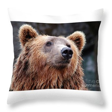 Throw Pillow featuring the photograph Close Up Bear by MGL Meiklejohn Graphics Licensing