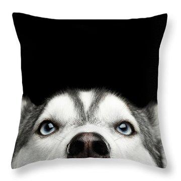 Throw Pillow featuring the photograph Close-up Head Of Peeking Siberian Husky by Sergey Taran