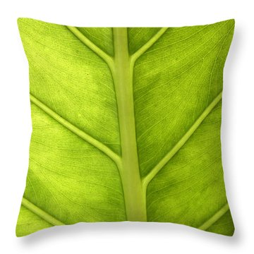 Close-up Of A Elephant Ear Throw Pillow
