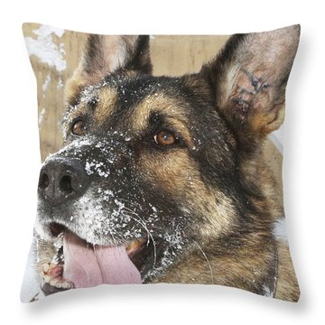 Close-up Of A Military Working Dog Throw Pillow by Stocktrek Images