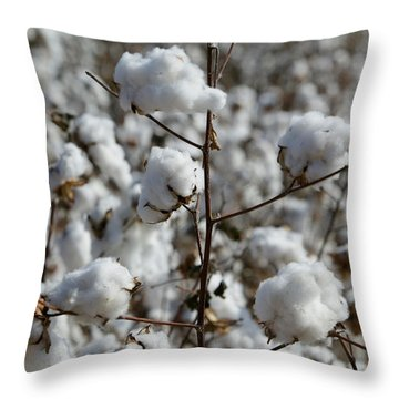 Close-up Of Cotton Plants In A Field Throw Pillow