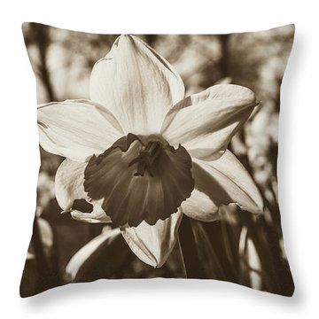 Throw Pillow featuring the photograph Close Up Of Daffodil Flower by Jacek Wojnarowski