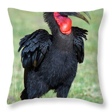Close-up Of Ground Hornbill Bucorvidae Throw Pillow
