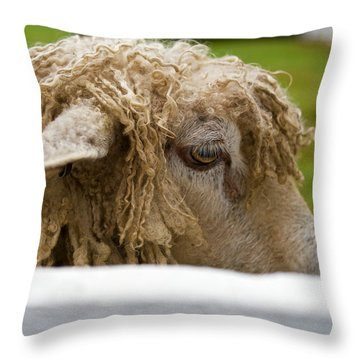Close-up Of Leicester Longwool Throw Pillow