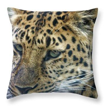 Close Up Of Leopard Throw Pillow