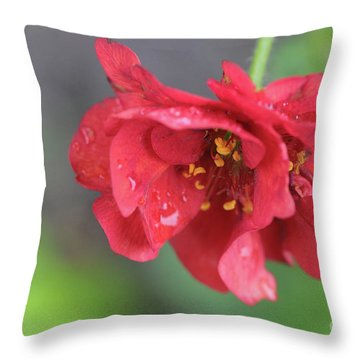 Close-up Of Red Flower Throw Pillow