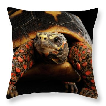 Close-up Of Red-footed Tortoises, Chelonoidis Carbonaria, Isolated Black Background Throw Pillow by Sergey Taran
