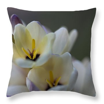 Close-up Of White Freesia Throw Pillow