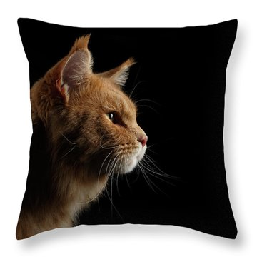 Close-up Portrait Ginger Maine Coon Cat Isolated On Black Background Throw Pillow