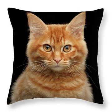 Close-up Portrait Of Ginger Kitty On Black Throw Pillow