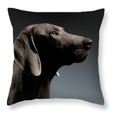 Close-up Portrait Weimaraner Dog In Profile View On White Gradient Throw Pillow