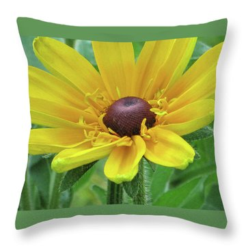 Close Up Summer Daisy Throw Pillow by Michele Wilson