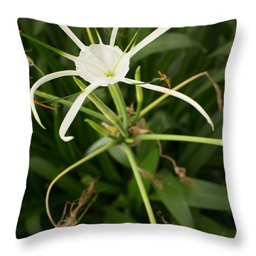Close Up White Asian Flower With Leafy Background, Vertical View Throw Pillow by Jason Rosette