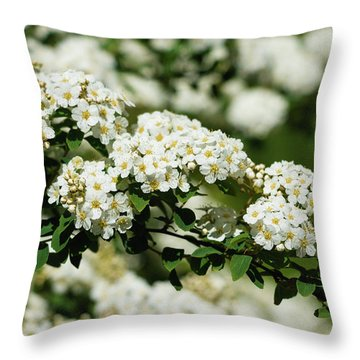 Throw Pillow featuring the photograph Close-up White Spirea Bush by Cristina Stefan