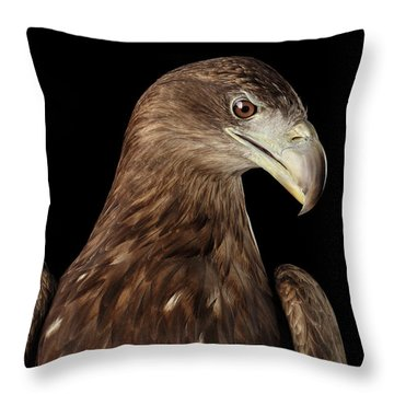 Close-up White-tailed Eagle, Birds Of Prey Isolated On Black Bac Throw Pillow