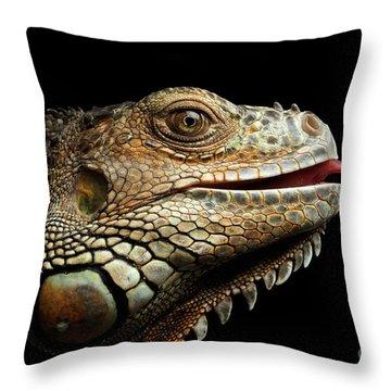 Close-upgreen Iguana Isolated On Black Background Throw Pillow by Sergey Taran