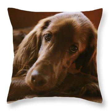 Close View Of An Irish Setter Relaxing Throw Pillow by Brian Gordon Green