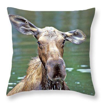 Close Wet Moose Throw Pillow