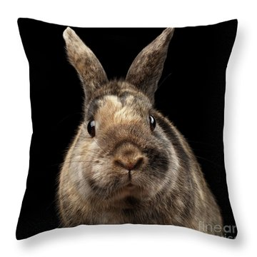 Closeup Funny Little Rabbit, Brown Fur, Isolated On Black Backgr Throw Pillow