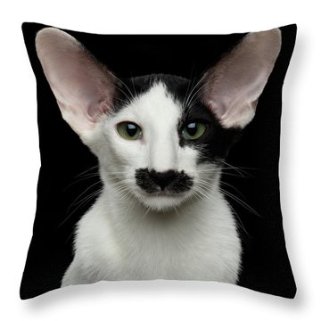 Throw Pillow featuring the photograph Closeup Funny Oriental Shorthair Looking At Camera Isolated, Bla by Sergey Taran