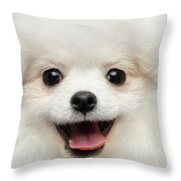 Closeup Furry Happiness White Pomeranian Spitz Dog Curious Smiling Throw Pillow