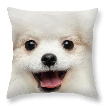Closeup Furry Happiness White Pomeranian Spitz Dog Curious Smiling Throw Pillow