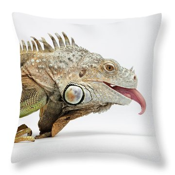 Closeup Green Iguana Showing Tongue On White Throw Pillow