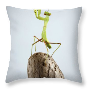 Closeup Green Praying Mantis On Stick Throw Pillow