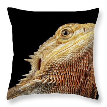 Closeup Head Of Bearded Dragon Llizard, Agama, Isolated Black Background Throw Pillow