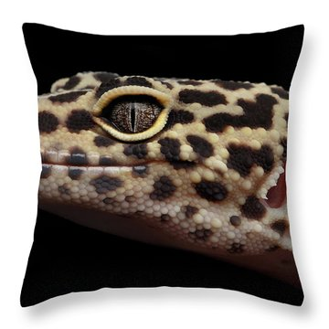 Closeup Head Of Leopard Gecko Eublepharis Macularius Isolated On Black Background Throw Pillow