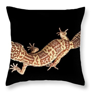 Closeup Leopard Gecko Eublepharis Macularius Isolated On Black Background Throw Pillow by Sergey Taran