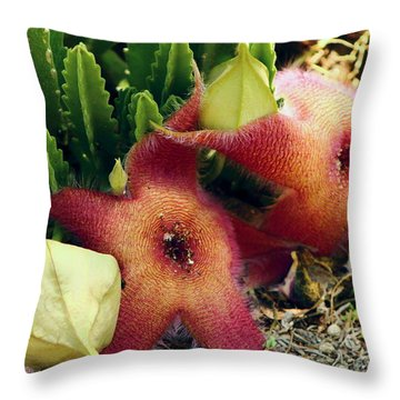 Closeup Of A Desert Starfish Throw Pillow